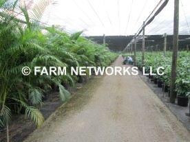 Areca Palm Homestead