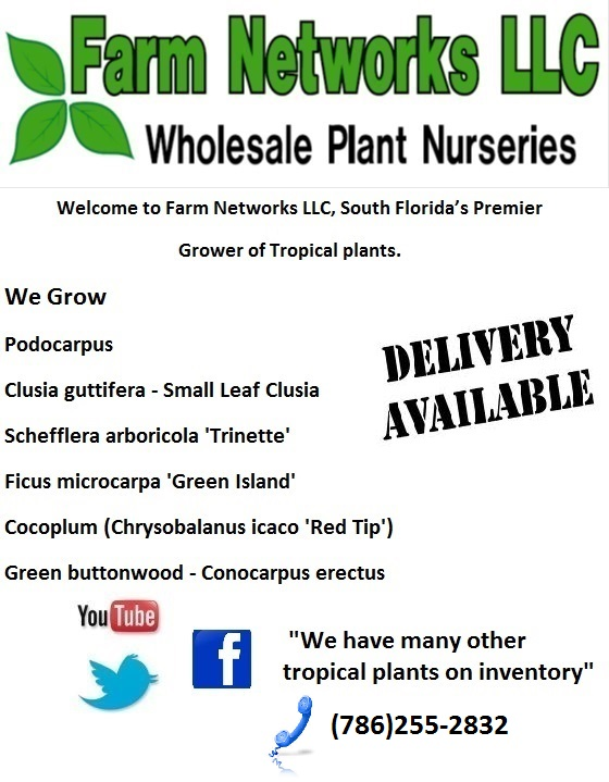 Florida Hedge Plants