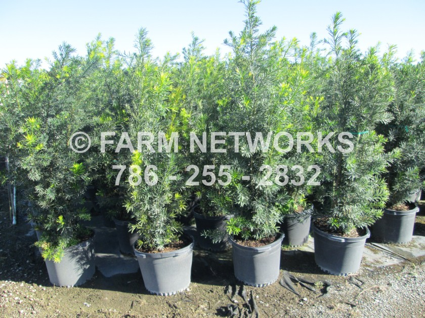 florida plant exporter